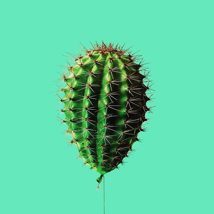 globo cactus