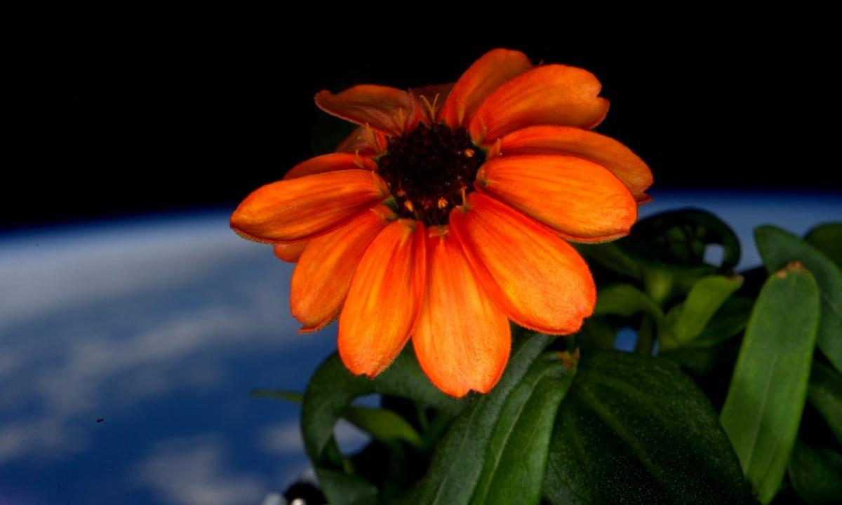 La primera flor en el espacio
