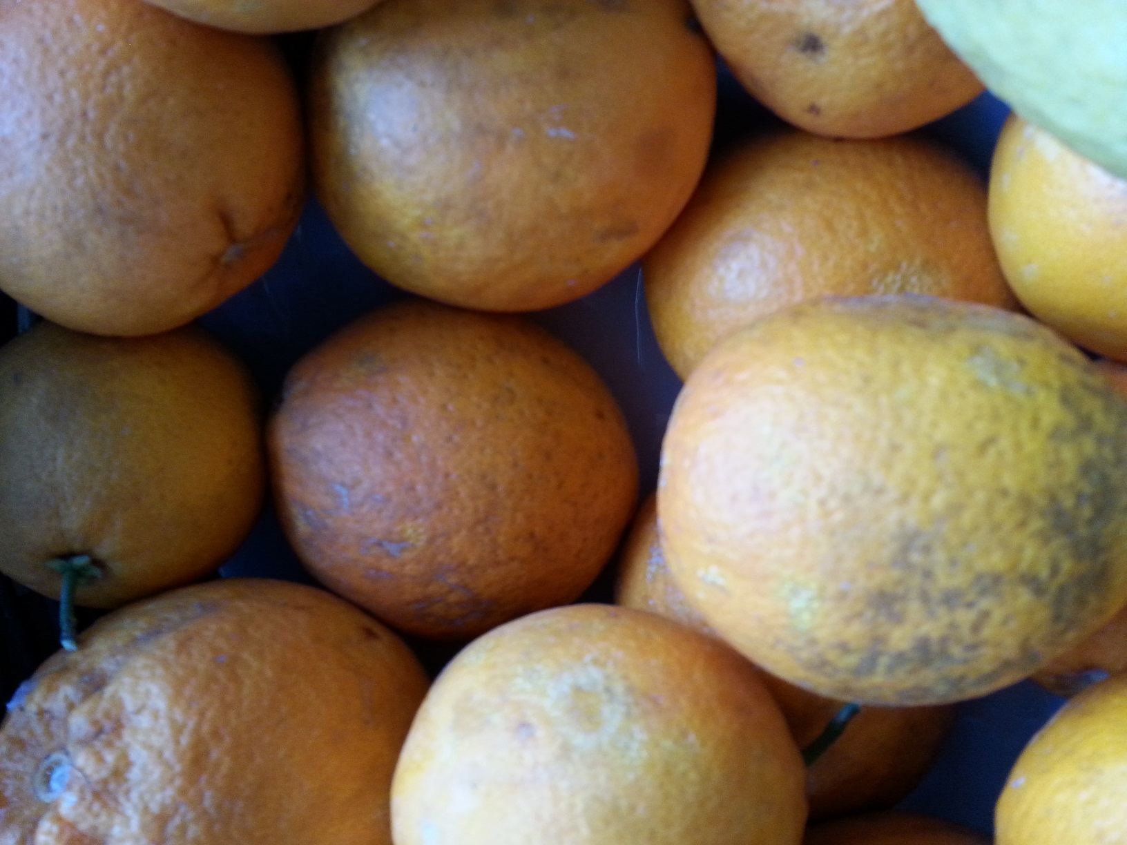 vegetales feos - naranjas