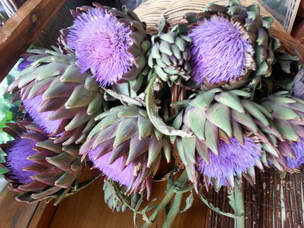 La flor de la alcachofa