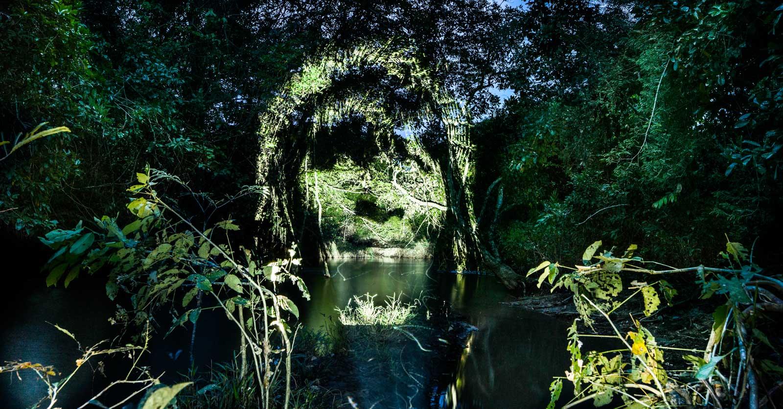 Los rostros de la selva - Philippe Echaroux
