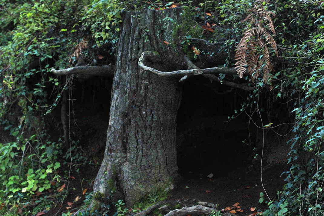 árbol misterioso
