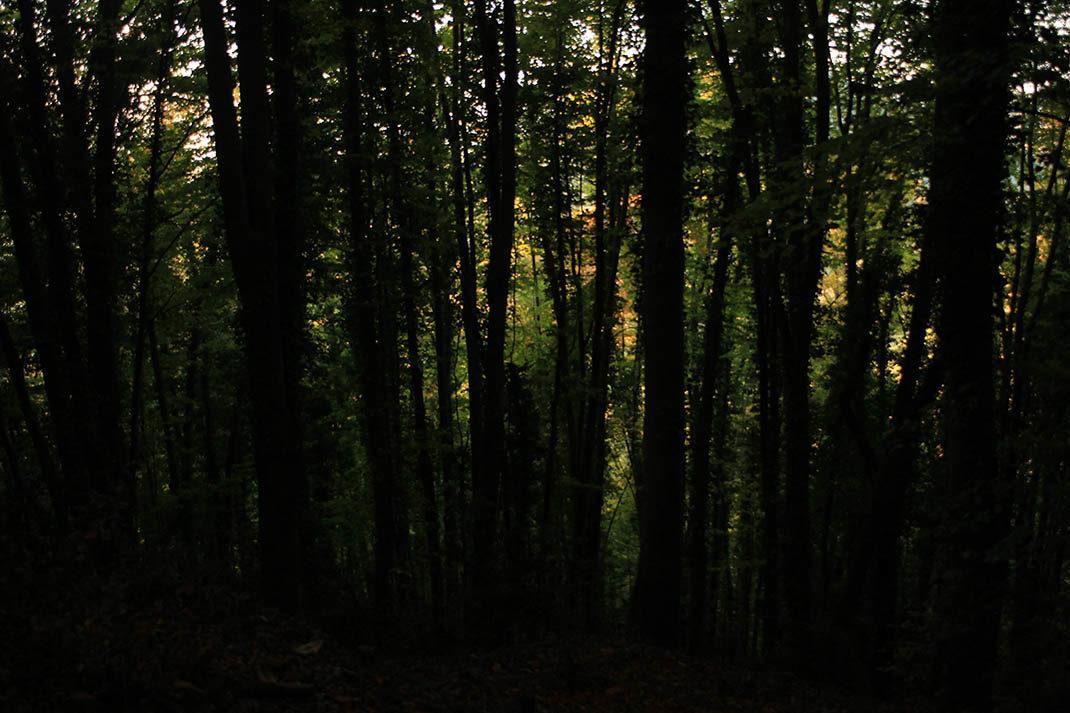 Luz entre los árboles