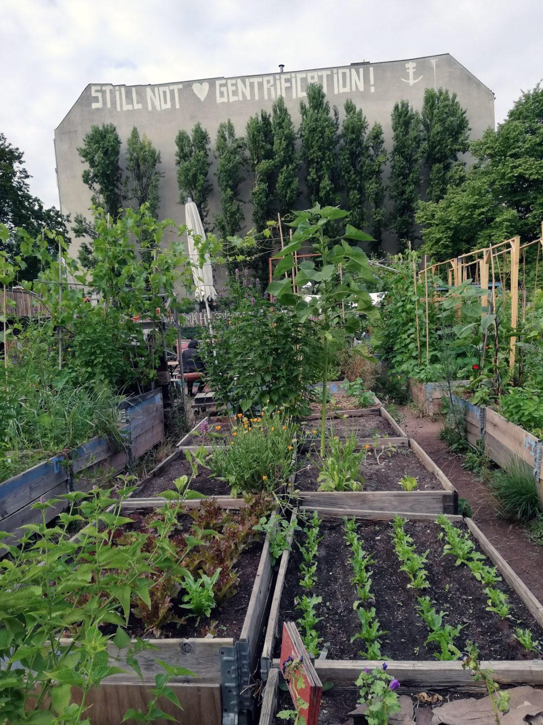 plantar-arboles-contra-el-cambio-climatico