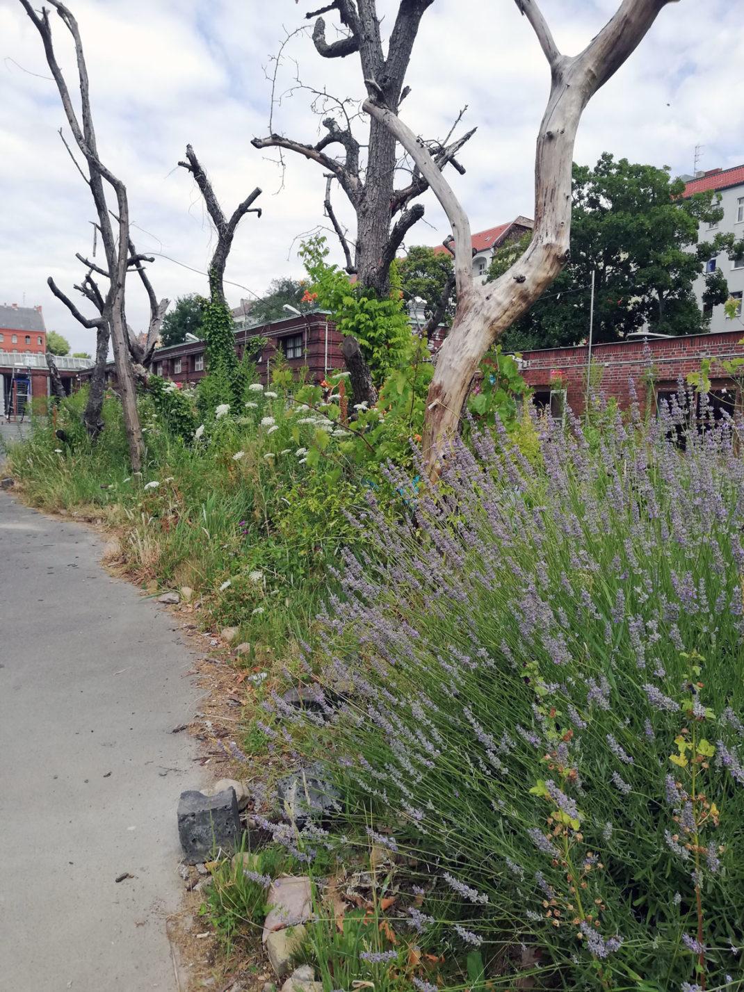 llevar la naturaleza a las ciudades